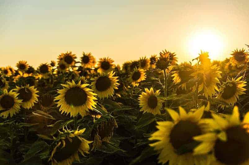 De invloed van de zon op ons lichaam