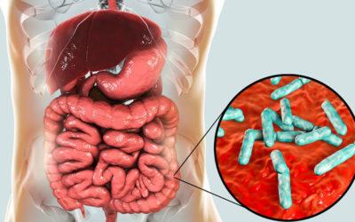 De voornaamste oorzaak van darmproblemen: verstopping!