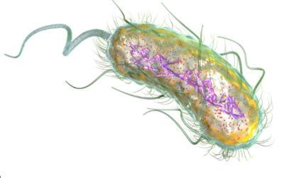 Moeten we destructieve organismen in de darmen vernietigen?