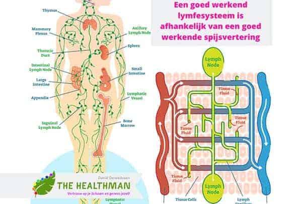 De lymfe en de relatie met kanker 1