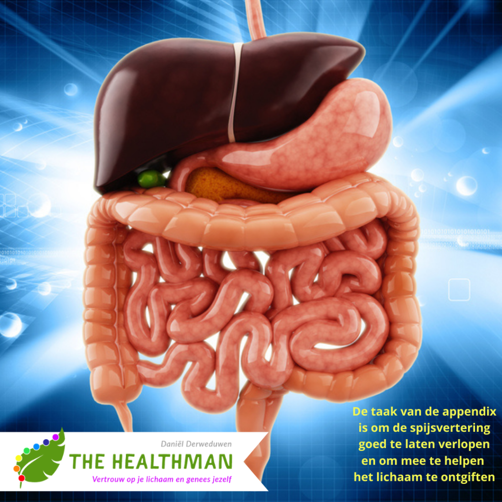 De appendix, darmflora